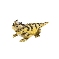 Olivia_Riegel_Horned_Frog_Box