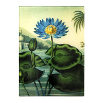 Working_Title_Egyptian_Water_Lilly_Plate